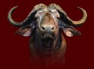 Don Capp's - Taxidermy Studio LLC - Master African Taxidermist
