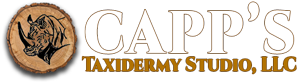 Capp's Taidermy Studio, LLC Global Wildlife Artistry - US - African