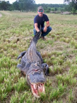 Don With Alligator