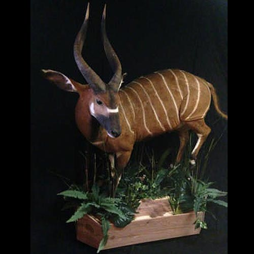 African Taxidermy Gallery