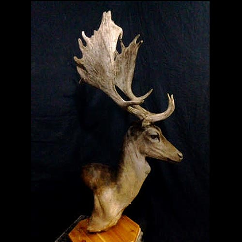 International Taxidermy Gallery