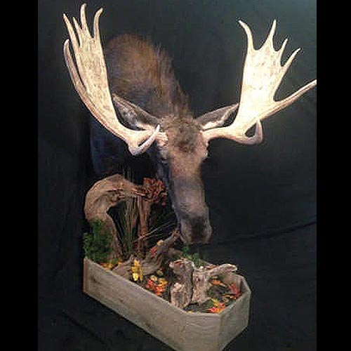North American Heads Taxidermy Gallery