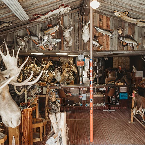Taxidermy Studio Anaconda MT